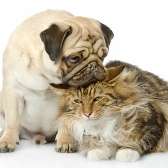 Pet Friendly Apartments Heights dog_and_cat